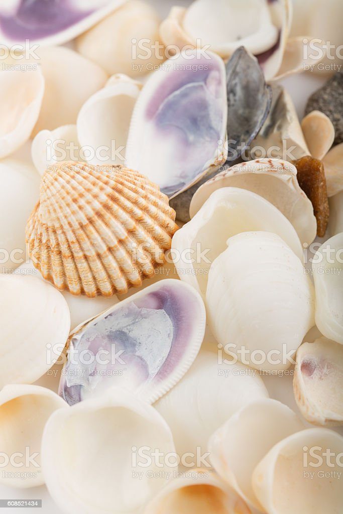 Background from a sea shells stock photo