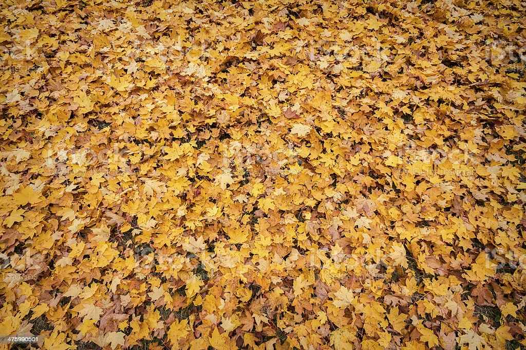 Background from autumn royalty-free stock photo