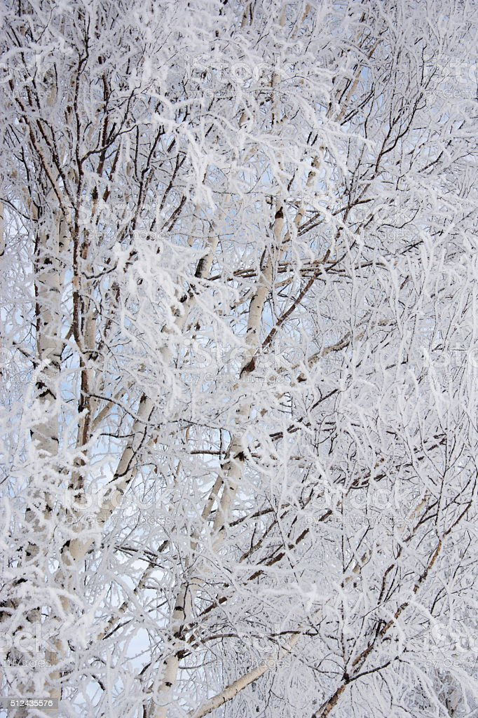 background from birch branches stock photo