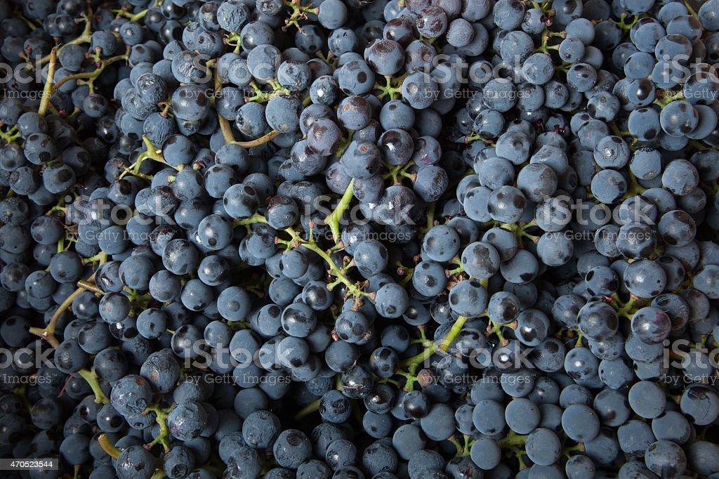 background from blue grape stock photo