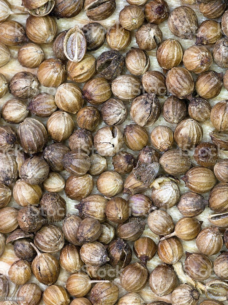 background from dried coriander seeds royalty-free stock photo