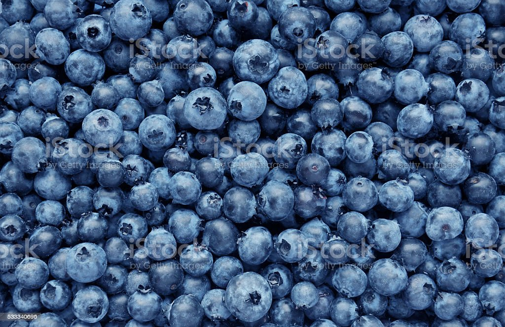 Background from freshly picked blueberries stock photo