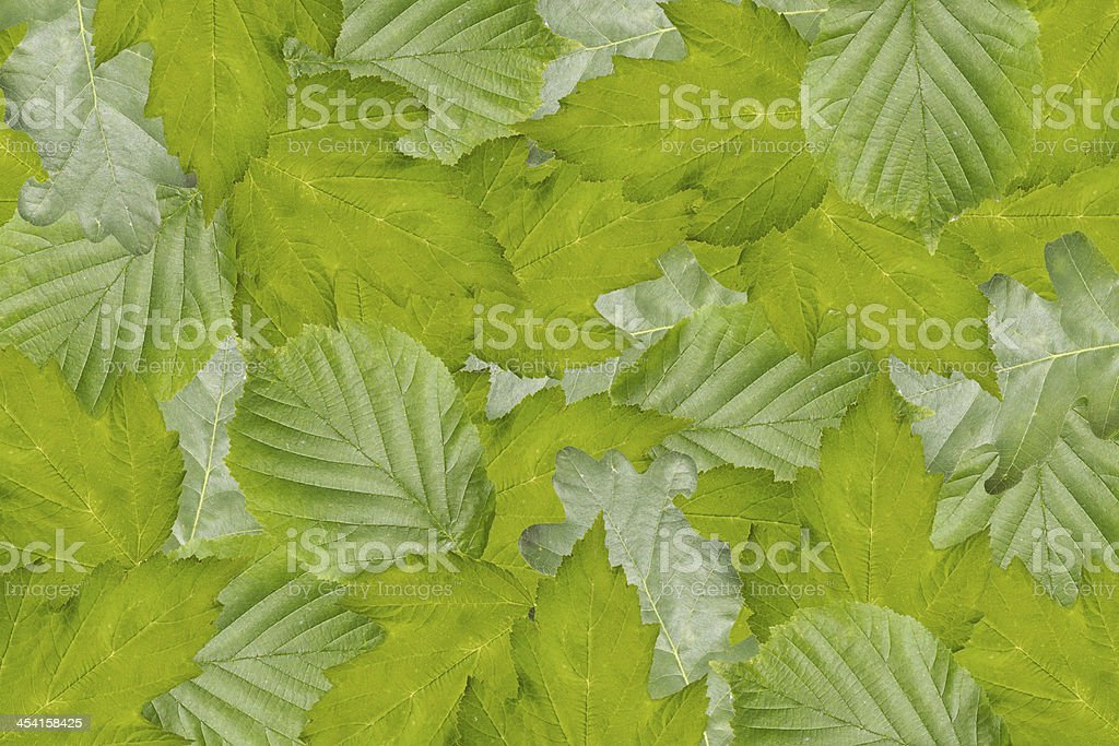 background from leaves royalty-free stock photo