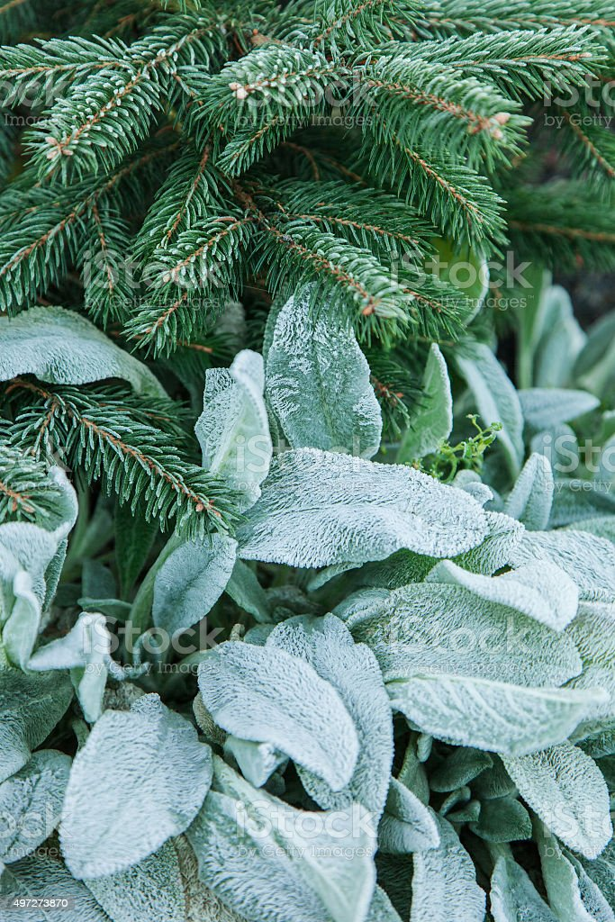 Background from plants with rime stock photo