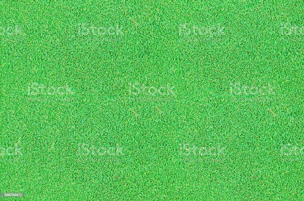 Background from the cut grass stock photo
