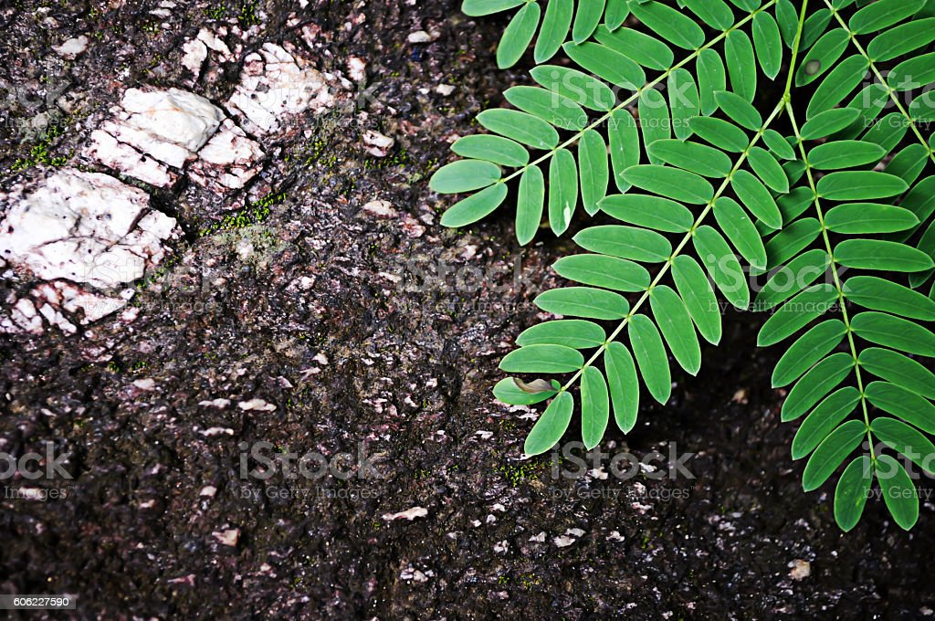 Background Green leaf with stone. For work to you. stock photo