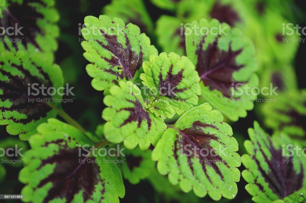 Background Green Plant stock photo