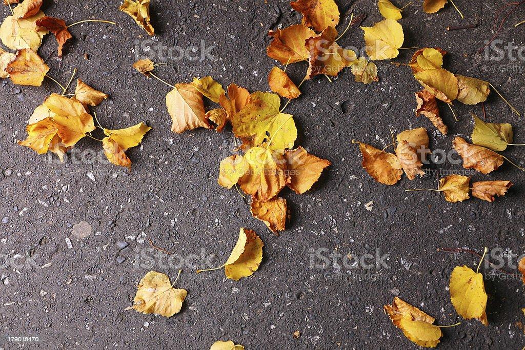 Background group autumn orange leaves Outdoor royalty-free stock photo