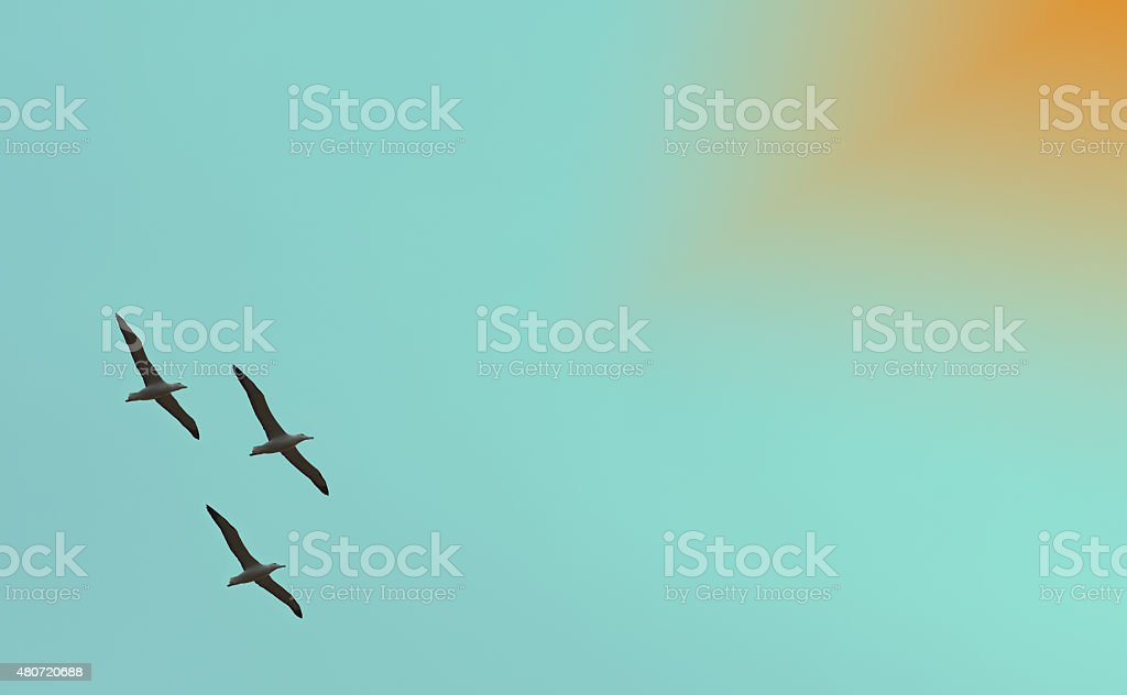 background image of flying albatross stock photo