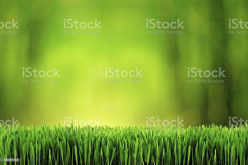 Fond herbe photo libre de droits