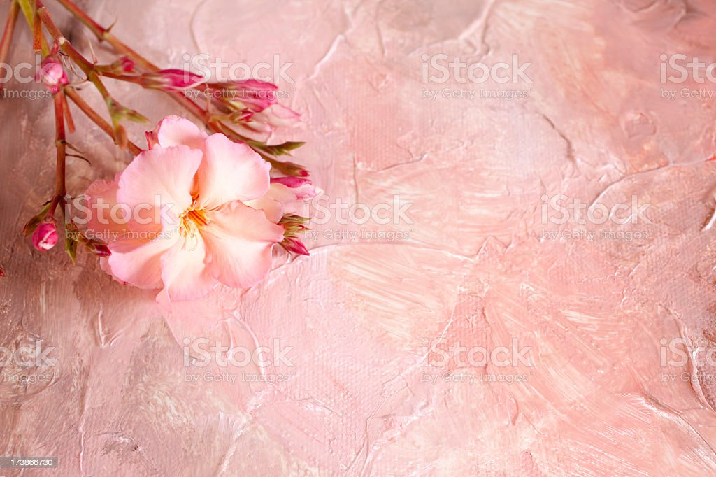 Background in flesh tones with oleander bloom royalty-free stock photo
