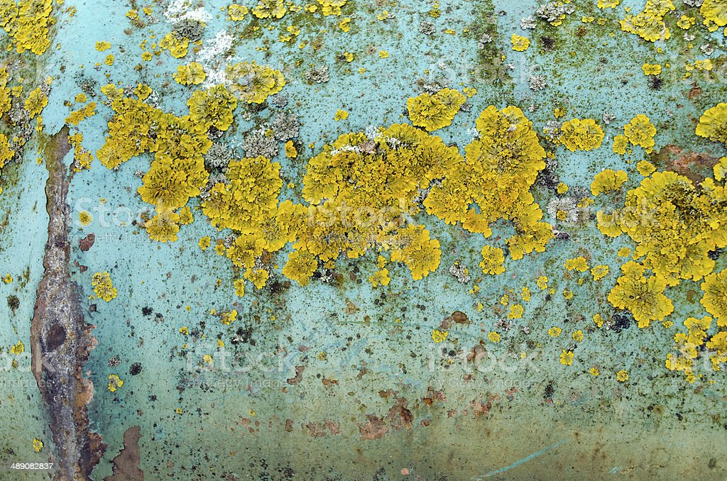 background iron wall peel paint yellow moss lichen royalty-free stock photo