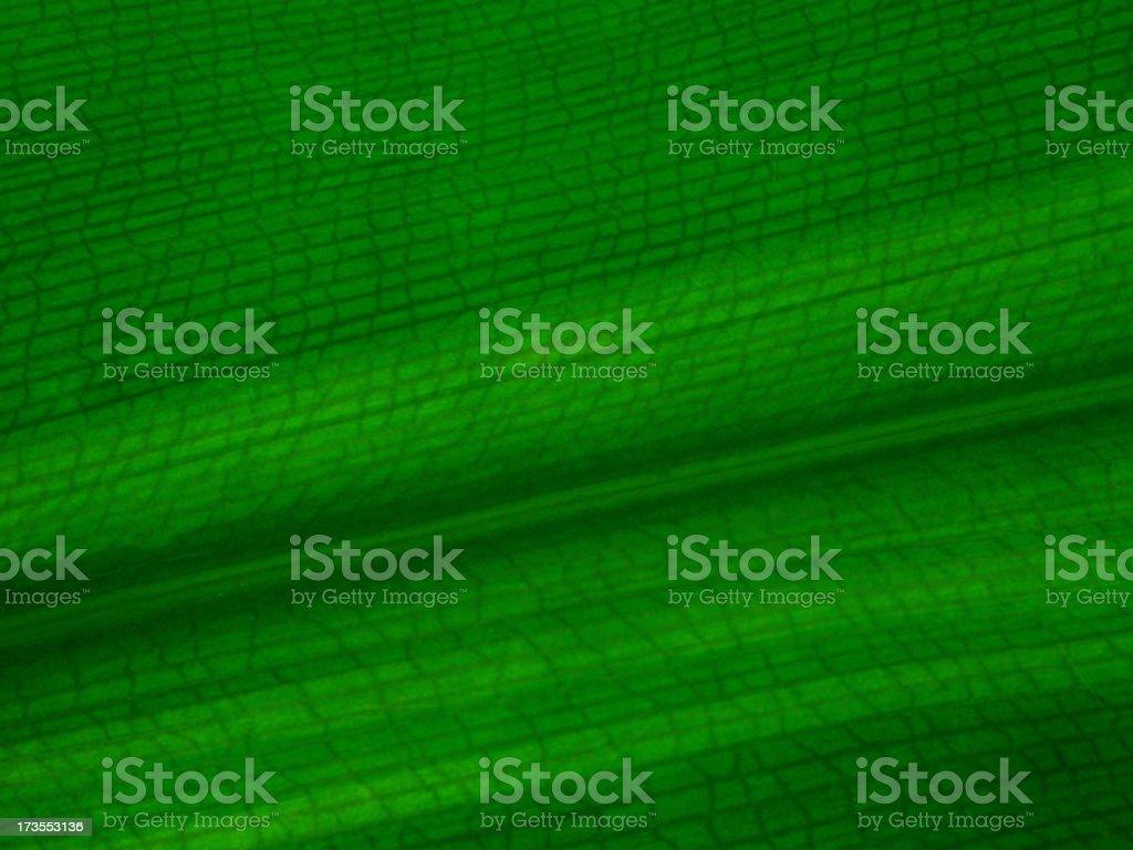 Background Leaf royalty-free stock photo