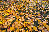 Background made of autumn leaves