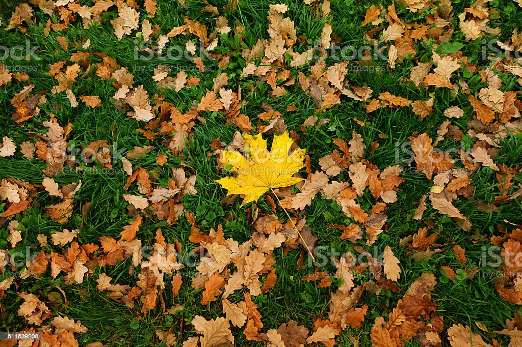 background of autumn fallen leaves stock photo