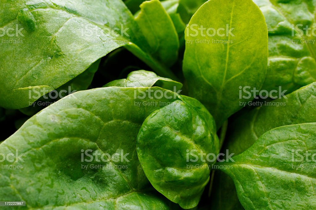 Background of baby spinach salad leaves royalty-free stock photo
