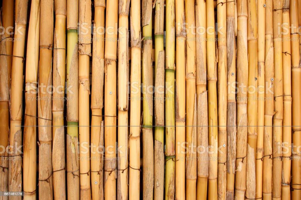 Background of bamboo stalks stock photo