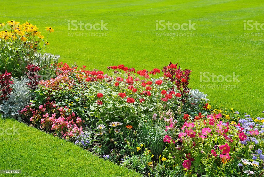 background of bright garden flowers stock photo