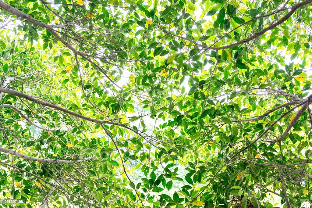 Arrière-plan de feuilles d'arbres lumineux photo libre de droits