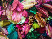 background of colorful dry flower leaves