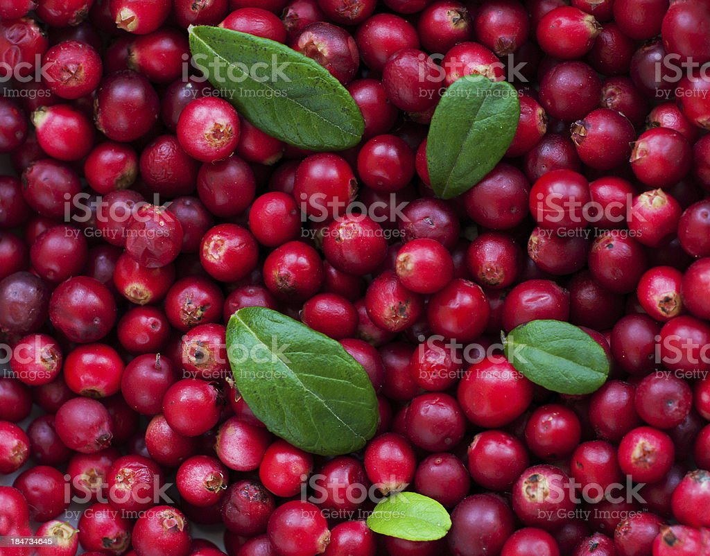 Background of Cranberry royalty-free stock photo