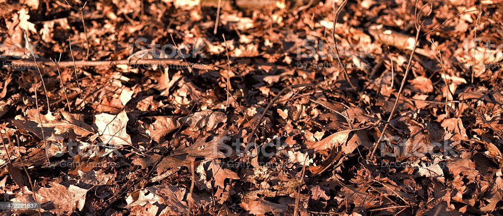 Background of dry leaves royalty-free stock photo