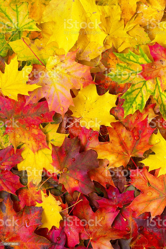 Background of fallen autumn leaves. stock photo