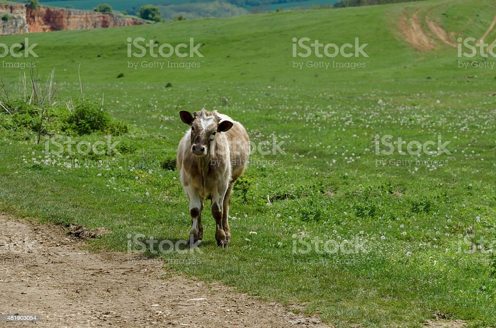 Background of field with grass, cow-man and trees stock photo