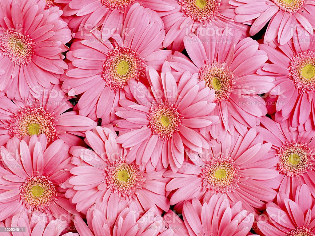 Background of  flower. stock photo
