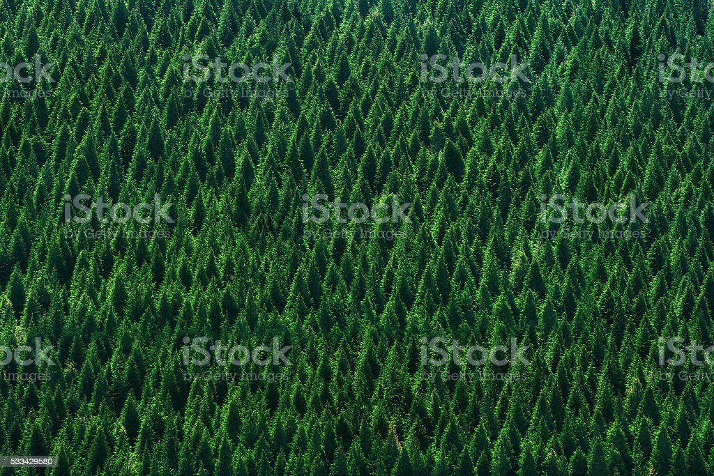 background of forest with trees pattern stock photo