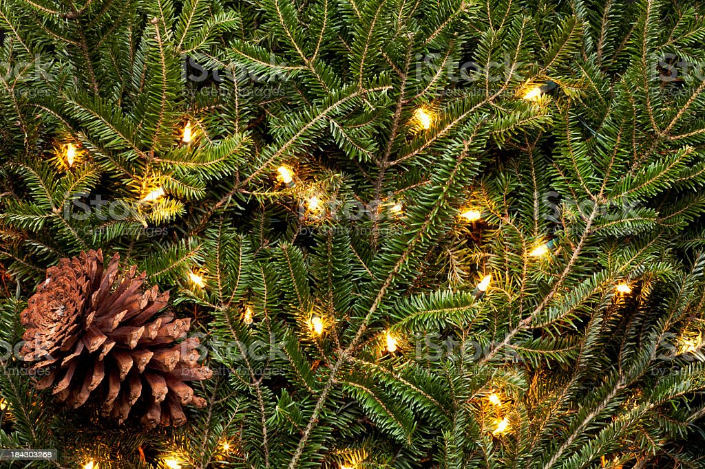 Background of Frasier Fir Evergreen Branches and Pine Cone. XXXL stock photo