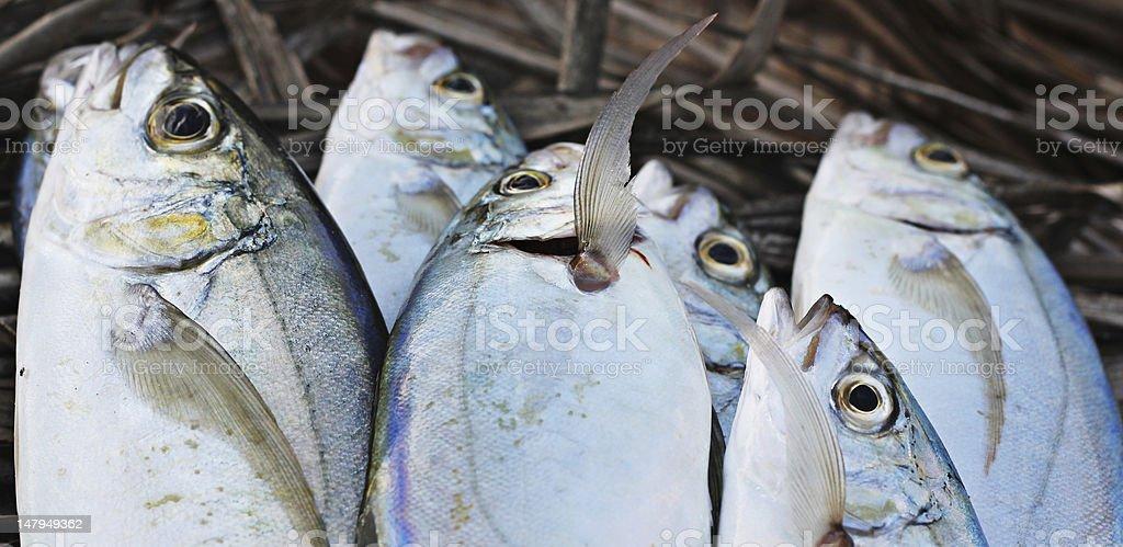 background of fresh fish stock photo