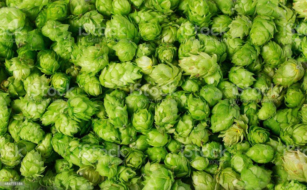 Background of fresh hops wallpaper stock photo