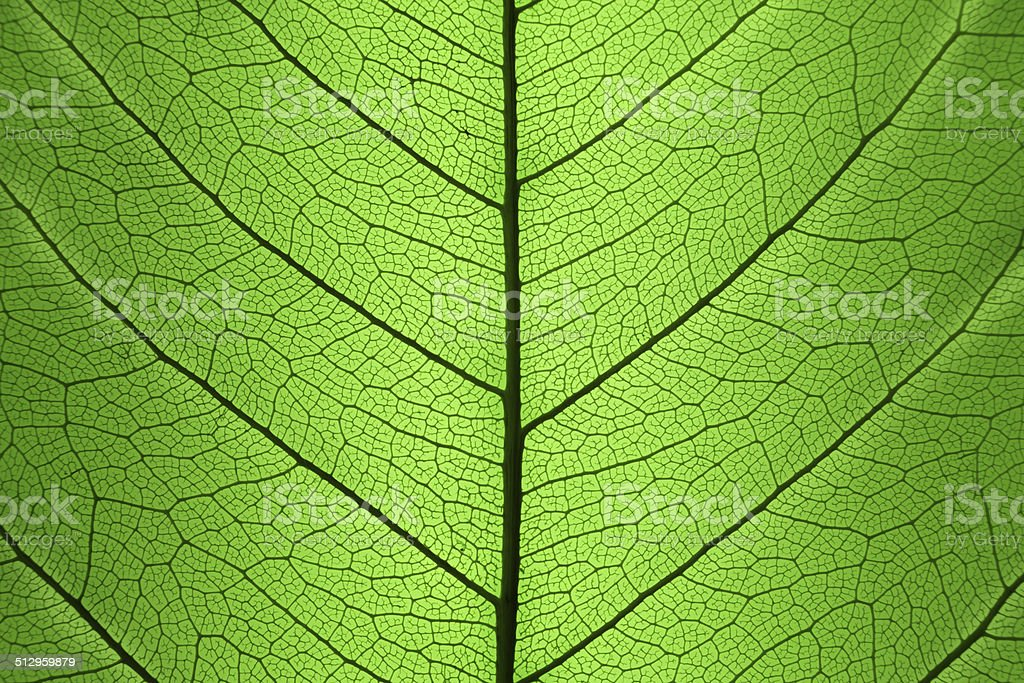 Background of Green Leaf cell structure - natural texture stock photo