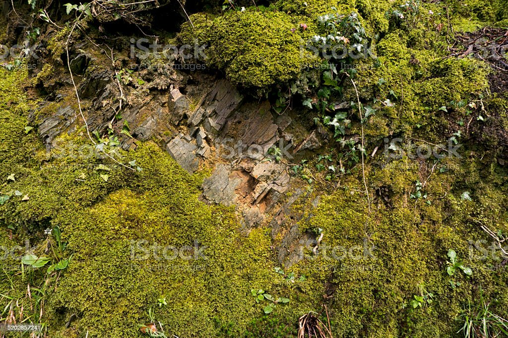 Background of green moss covered rock face stock photo
