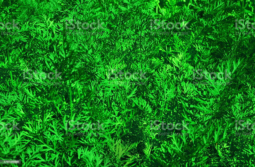 background of growing carrots royalty-free stock photo