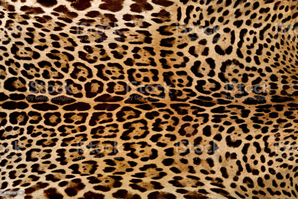 Background of Jaguar skin texture stock photo