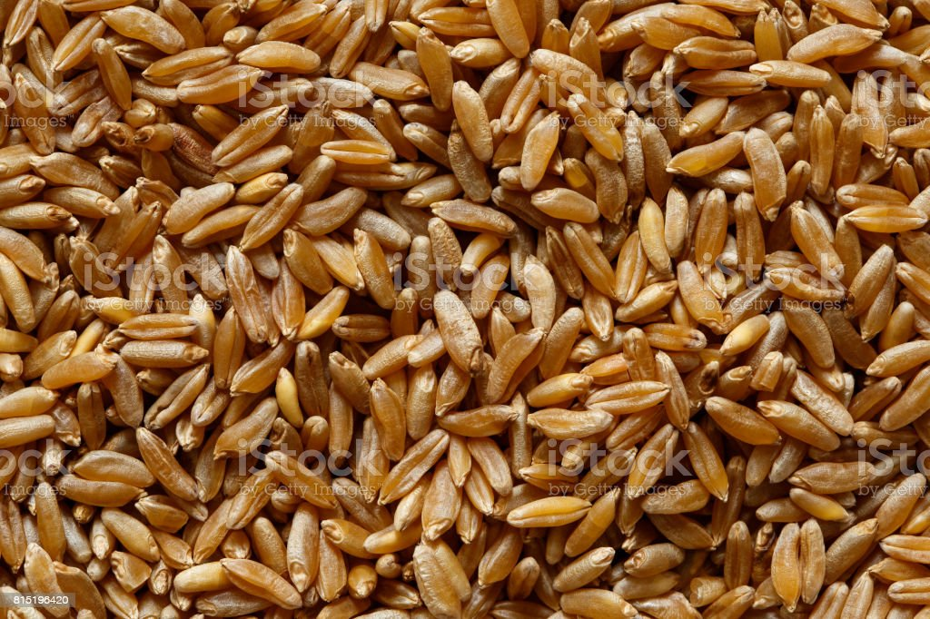 Background of kamut wheat kernels. stock photo