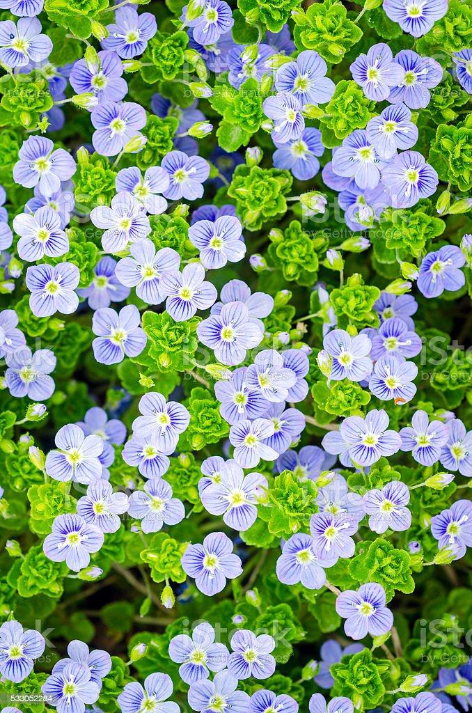 Background of many flowers stock photo