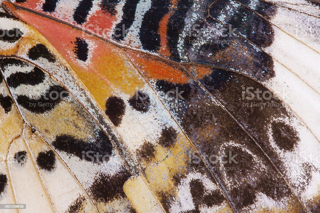 Background of monarch butterfly wing stock photo