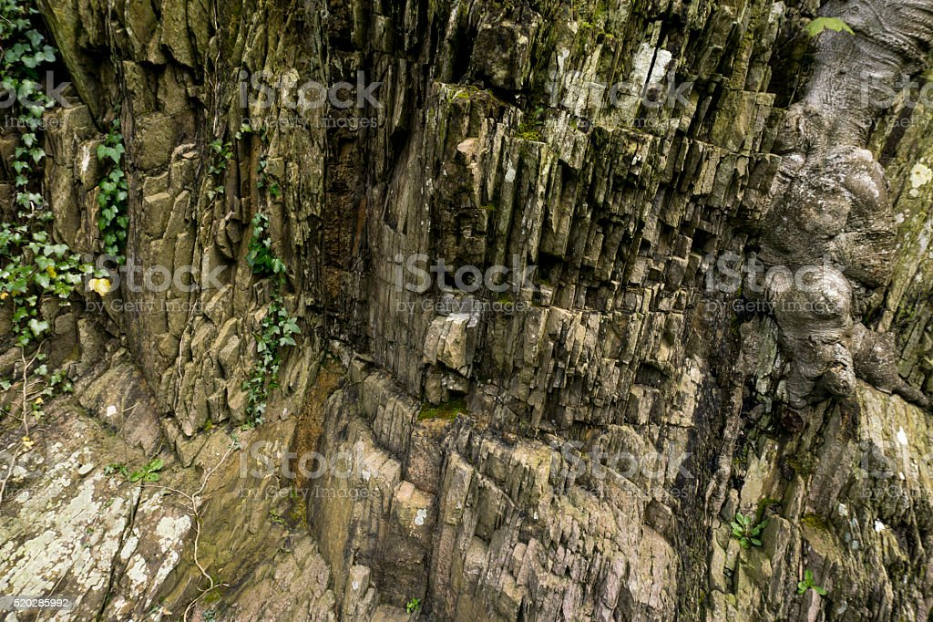 Background of moss on sheer rock face with tree root stock photo