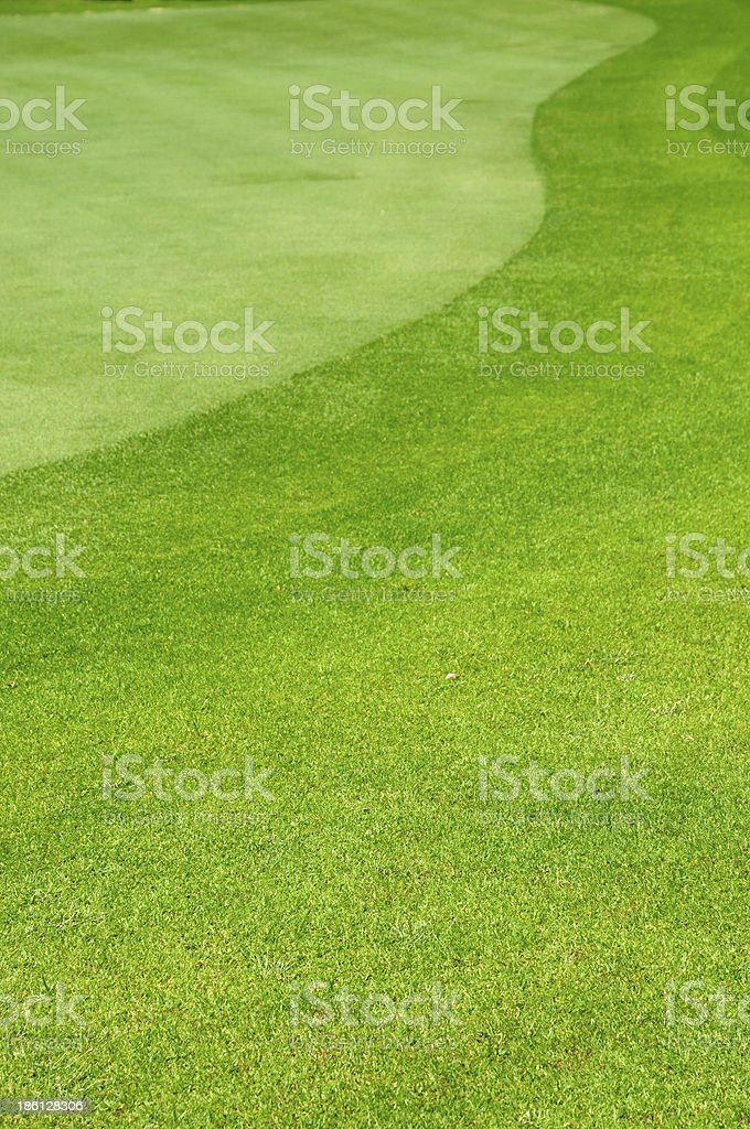 Background of mown lawn in a golf course royalty-free stock photo