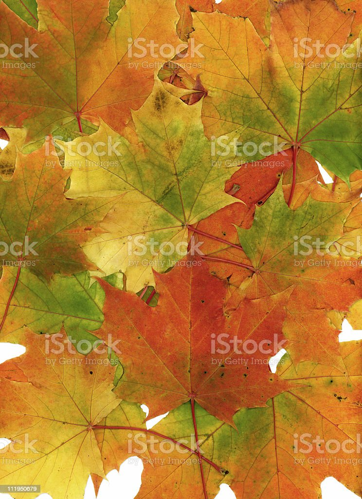 Background of multicolored fall leaves stock photo