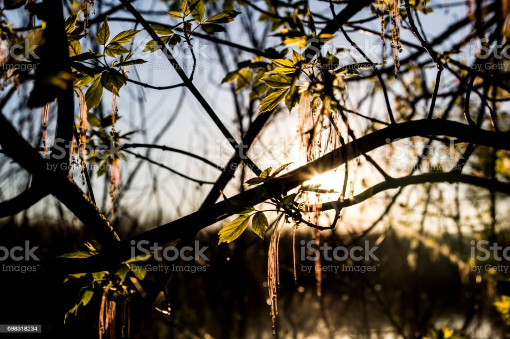 background of nature light stock photo