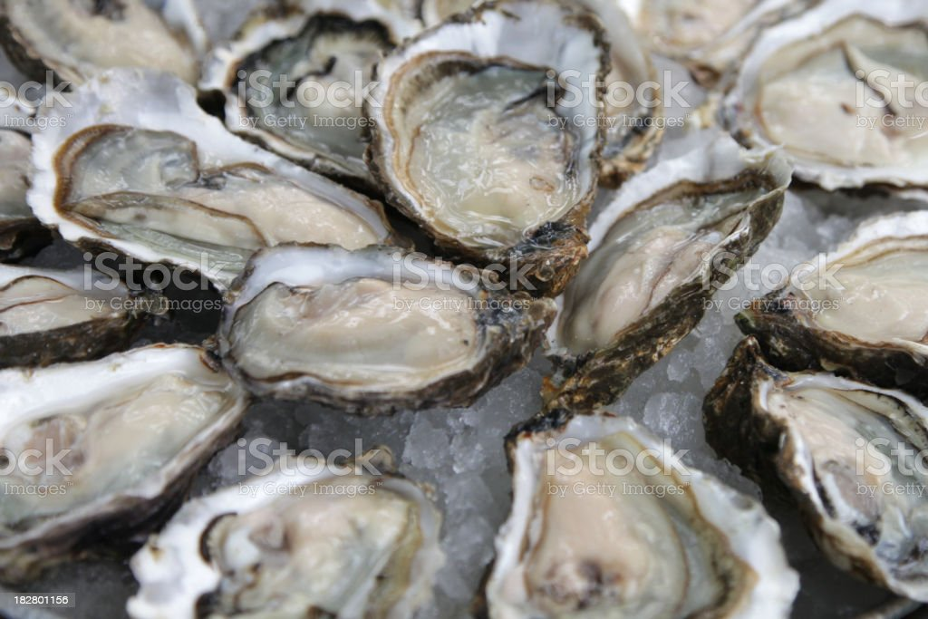 A background of open oyster shells stock photo