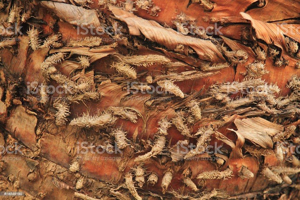 Background of palm bark royalty-free stock photo