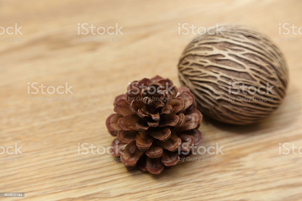 background of pine cone and the suicide tree stock photo