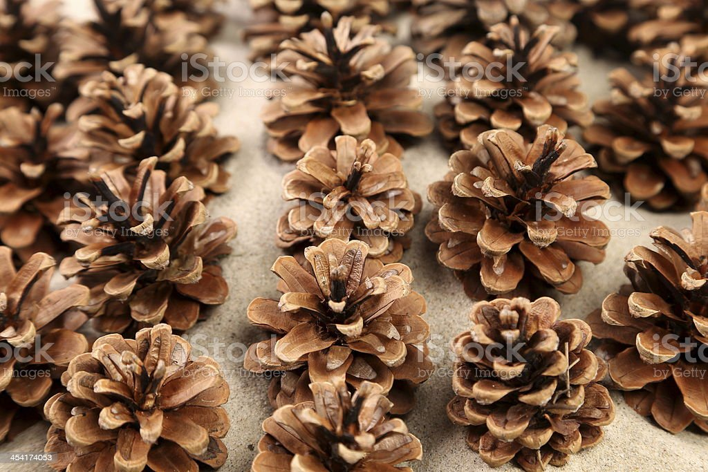 background of pine cones arranged on the sand royalty-free stock photo
