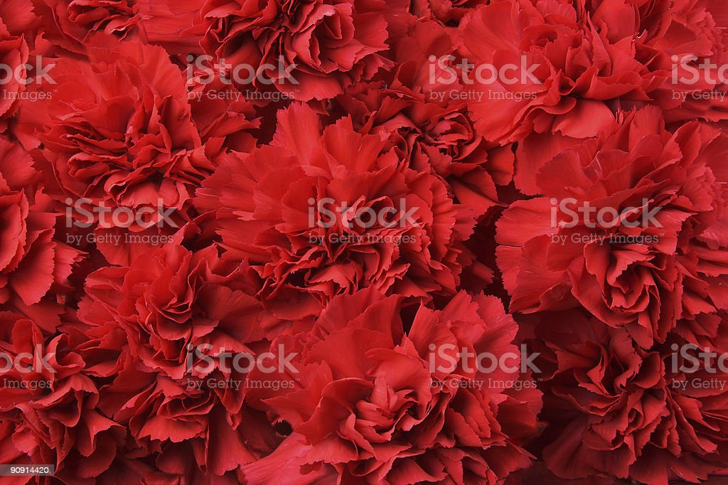 Background of red carnation flowers stock photo