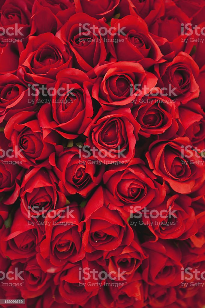 Background of red roses royalty-free stock photo
